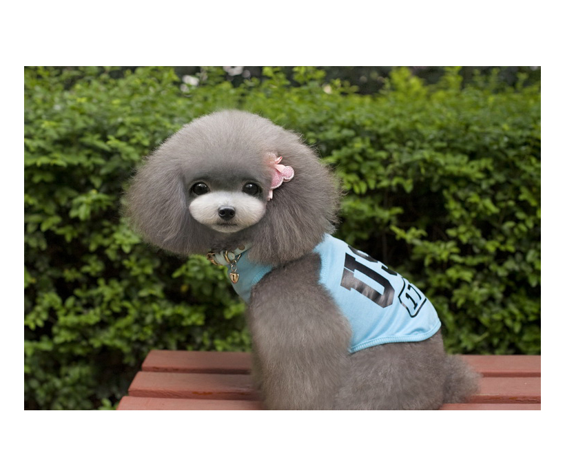 Summer Breathing Pet Clothing, Lovely Design Pet Clothes